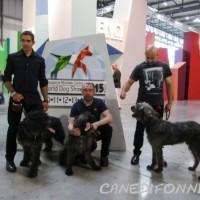 World dog show 2015